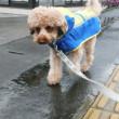 雨さんぽでもいつも通り 変更は許しません!