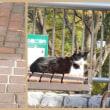 蜻蛉池公園の鴨達とおしどり1羽~2017・11・16