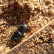 季節外れの昆虫採集