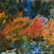 水面の映る秋