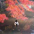 京都人的紅葉