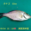 笑転爺の釣行記 9月14日☀ 久里浜・浦賀