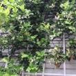 5月下旬の庭