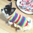 燦ちゃんのセーター