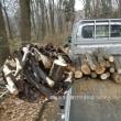 相模原北公園の倒木の伐採整備作業始まる!