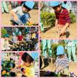 愛護活動&お店屋さんごっこ(ひまわり・ゆり・さくら組)3・4・5歳児