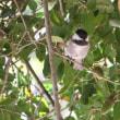 チマチマ動く小鳥