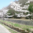 """春が来た  """" 桜花 爛漫 """""""