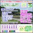 [古事記]第285回【算太クンからの挑戦状2017】(文学・歴史)