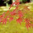 箱根美術館の紅葉