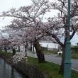みちのくの春・さくら2019;3分咲きの松が岬公園 in米沢