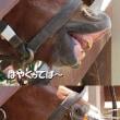 富士サファリパークの赤ちゃんライオン抱っこ