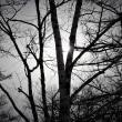 雪夜の森×Robert Frost