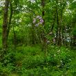 森に咲く花