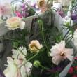 ハナハナハナ❗雨雪でも華やかな花植物入荷しました💕柱サボテンも入荷です。