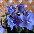 美味しい紫ずきん「枝豆」のご飯