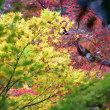 紅葉~立羽田の景