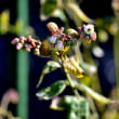 畑は春! 白菜に花が、桃・梨に蕾が、ブルーベリーに花が・・・