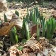 春が地上に降りてきた