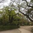 静寂度100%の公園