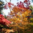 函館の秋-見晴公園(香雪園)