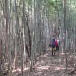 16 白鳥山・松子山(453・524m:東広島市)縦走登山(続き)  下山時の様子