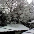 またまたの雪