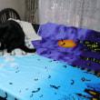 ハロウィン猫の、あるある
