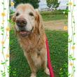 9月11日(月)…犬の保育園&はじめてのロースィーツレッスン