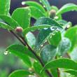 雨で涼しい一日