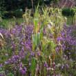 「魔女の雑草」退治へ アフリカ食糧問題解決に新手法。名古屋大トランスフォーマティブ生命分子研究所