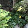私の愛する庭の植物たち