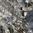 氷の世界 井上陽水と北山修