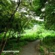 「座間谷戸山公園」で秋の昆虫「シオカラトンボ」が飛び始めた!!