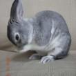 ウサギのウータン、ありがとう