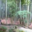 竹寺(報国寺)の続きです。朝一番は気持ちが爽やかですね。