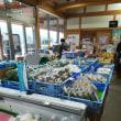 島根半島平田の十六島湾にワカメを取りに行った