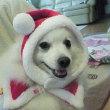 懐かしいクリスマスのココ