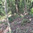 三田で森林整備