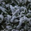 18年11/21~開田高原ー7.3℃~霧氷~②