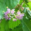 林の紫の花
