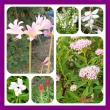 8月の家の花