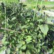 菜園の台風対策
