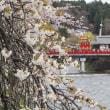 桜舞う春の恒例高山祭 屋台引き揃え