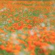 花の都公園花ざかり