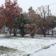 初雪☃️ トータルカーズワークスブログ