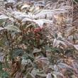霜が降った朝