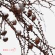 雪空バック・・・ベニヒワ