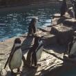 動物園に行きました