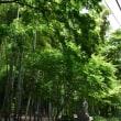 2018/06 鎌倉の紫陽花 ~2.建長寺(1)~